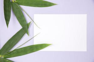 hoja de bambú con tarjeta blanca en blanco foto