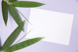 hoja de bambú con tarjeta blanca en blanco