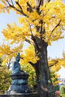 Stone Buddha under the tree in Thailand photo