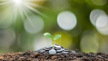 The saplings that grow on the pile of coins include the white light flooding the trees, business ideas, saving money, and economic growth