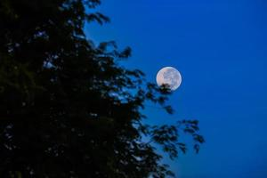 silueta de árbol y luna
