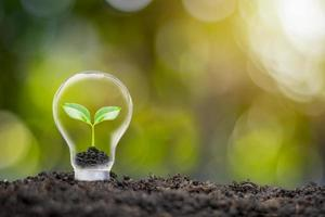 Trees growing in eco-friendly bulbs and blurred green nature background energy saving and environmental protection concept photo
