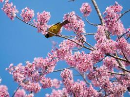 pájaro y flores rosadas foto