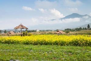 flores amarillas y montañas brumosas