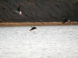 Birds flying near water
