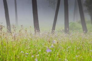 Purple flowers in a meadow photo