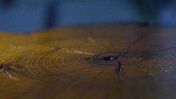 Polieren eines Holzstumpfes Nahaufnahme