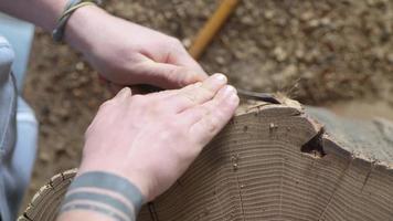 Rinde mit einem Meißel von einem Holzstumpf entfernen