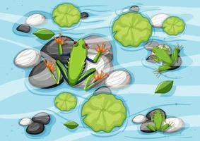 Aerial scene with frogs and lotus leaves in the pond vector