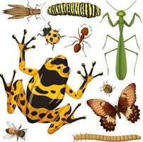 Set of different insects on white background vector