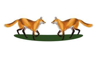 zorros salvajes animales iconos vector