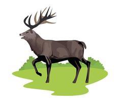 wild reindeer animal icon vector
