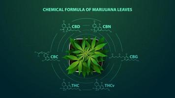 Green poster with chemical formulas of natural cannabinoids. Cannabis plant with infographic of chemical formulas of cannabinoids in digital style vector