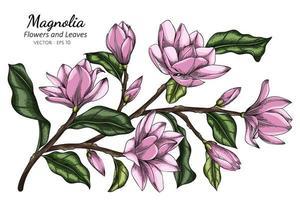 flores de magnolia rosa y hojas ilustración de dibujo con arte lineal sobre fondo blanco. vector