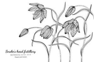 Snake's head fritillary flowers and leaves hand drawn botanical illustration with line art on white background.