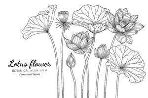 Lotus flowers and leaves hand drawn botanical illustration with line art on white background. vector