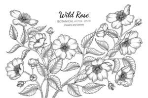 flores y hojas de rosas silvestres dibujadas a mano ilustración botánica con arte lineal sobre fondo blanco.