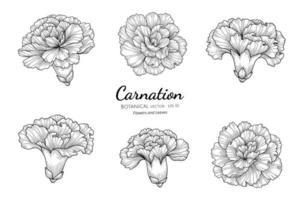 conjunto de flores y hojas de clavel dibujado a mano ilustración botánica con arte lineal sobre fondo blanco.