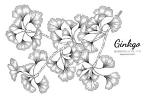 Ginkgo hand drawn botanical illustration with line art on white background. vector