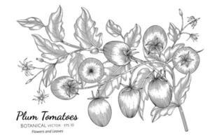 Plum tomato hand drawn botanical illustration with line art on white background.