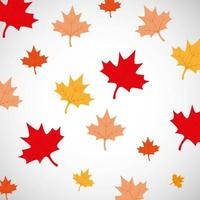 canada day maple leaves background vector