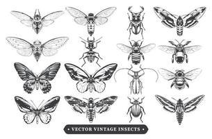 colección de insectos vintage vector