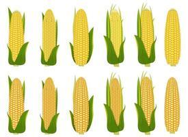 Corn vector design  illustration set isolated on white background