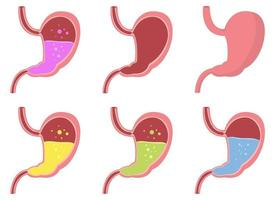 Stomach vector design illustration isolated on white background