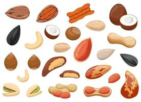 Nuts and peanuts set vector design illustration set isolated on white background