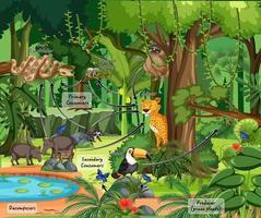 Diagrama que muestra la red alimentaria en la selva tropical. vector