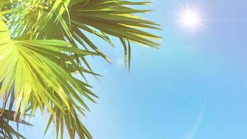 Tropical Landscape with Palm Leaves Against a Sunny Sky video