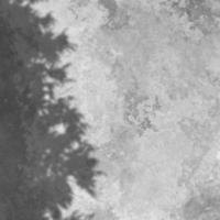 3D concrete texture background with tree shadow overlay