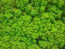 Beautiful aerial view of trees in the forest photo