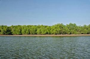 Beautiful blue sky and tropical mangrove forest in Krabi, Thailand photo