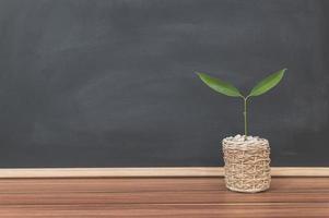 Plant pot on the desk