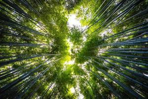 hermoso bosque de bambú en arashiyama, kyoto foto