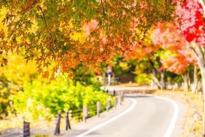 hermosas hojas de arce rojas y verdes foto