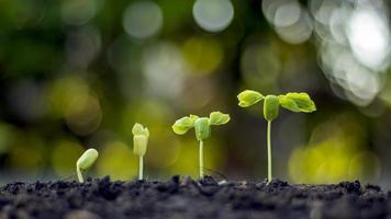 Concepto de crecimiento vegetal, un árbol que crece en el suelo y un fondo de naturaleza verde borrosa