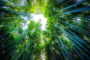 Beautiful bamboo forest at Arashiyama, Kyoto photo