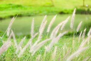 hierba con fondo de estanque borroso