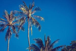 Sky with coconut palm trees