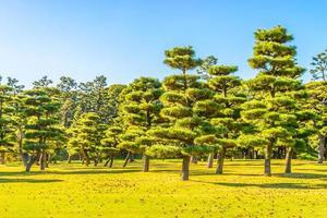 Árboles bonsai en el jardín del palacio imperial en la ciudad de Tokio, Japón foto