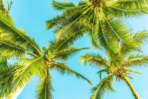 hermosas palmeras tropicales foto