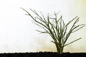 ramas secas sobre fondo blanco foto