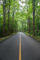 Road through a green forest