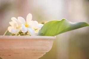 flores blancas y hojas foto