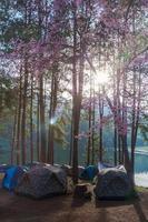 Setting sun over a campsite photo