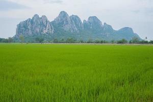 campo de arroz y montañas foto