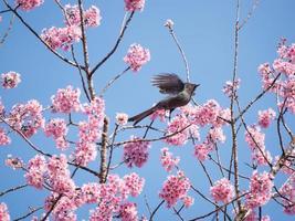 pájaro en vuelo con flores rosadas foto