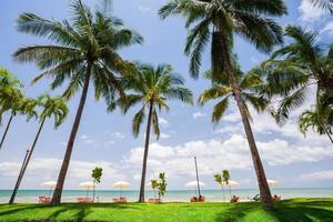 tumbonas en la playa foto